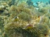 Indian Ocean sea life.