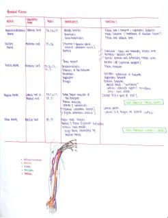 02-brachial-plexus