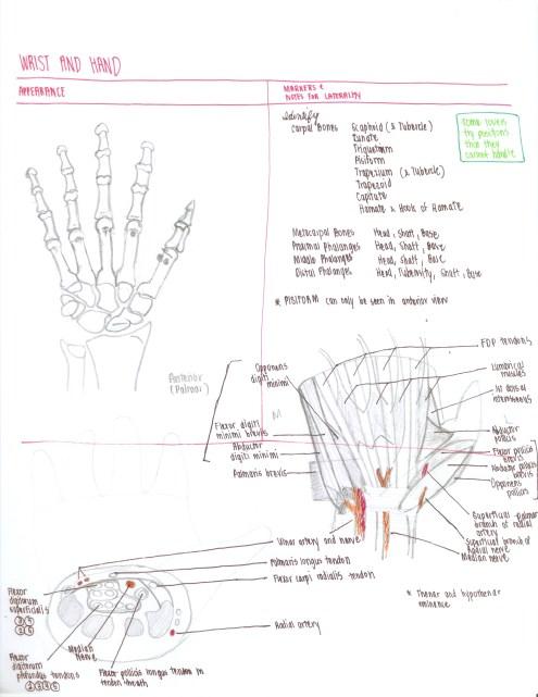 06-wrist-and-hand