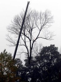 The crane turned toward the neighbor's driveway bringing the tree top near the ground.
