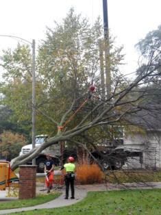 Once the base was on the chipper, the rest of the branches were lowered onto the driveway.