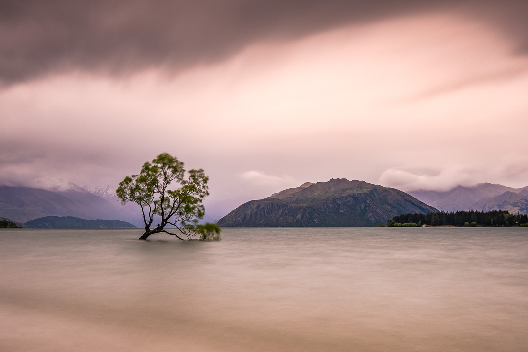 Fine Art Photography - That Wanaka Tree with moody sky