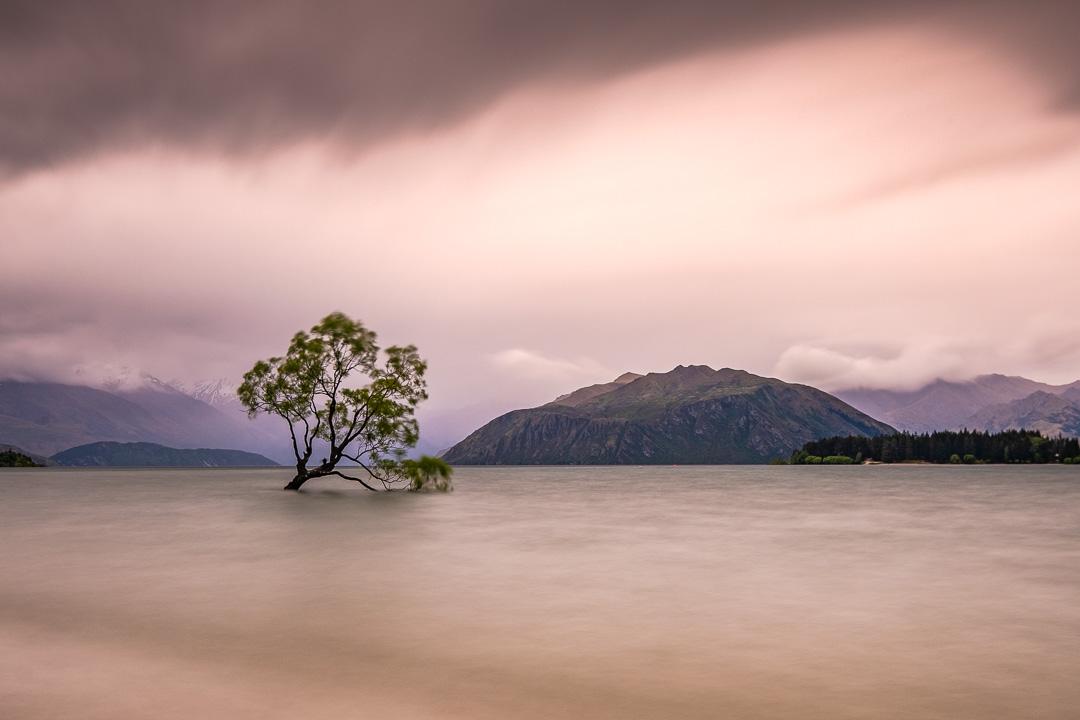 Fine Art Photography - That Wanaka Tree with moody sky