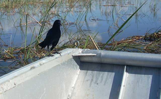 bird resting on boat