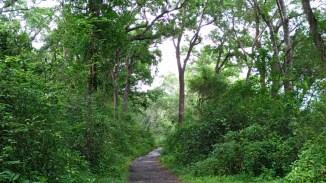 wanagama-eduforest-020