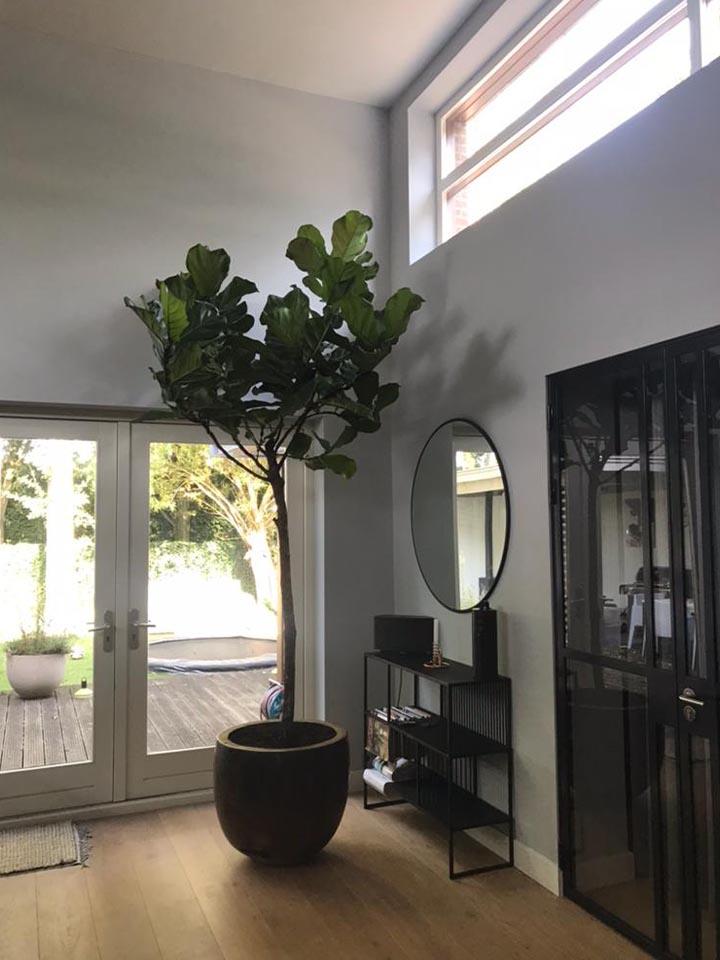 Jasmijnbloembinders - plant