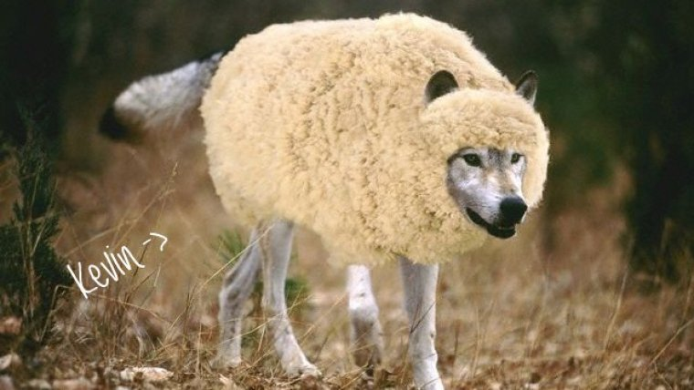 wolf-in-sheeps-clothing1-001