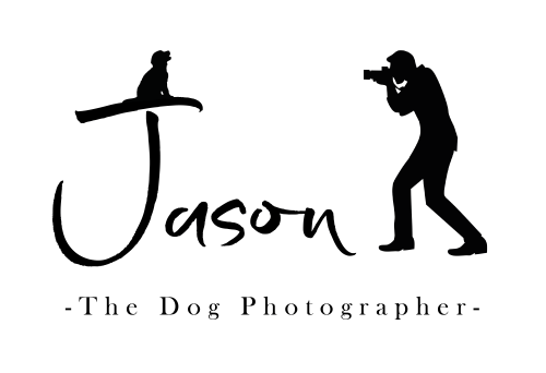 Jason the dog photographer county durham