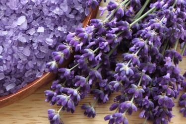 TSDS108310-lavender