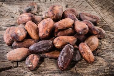 TSDS108318-cocoa-beans