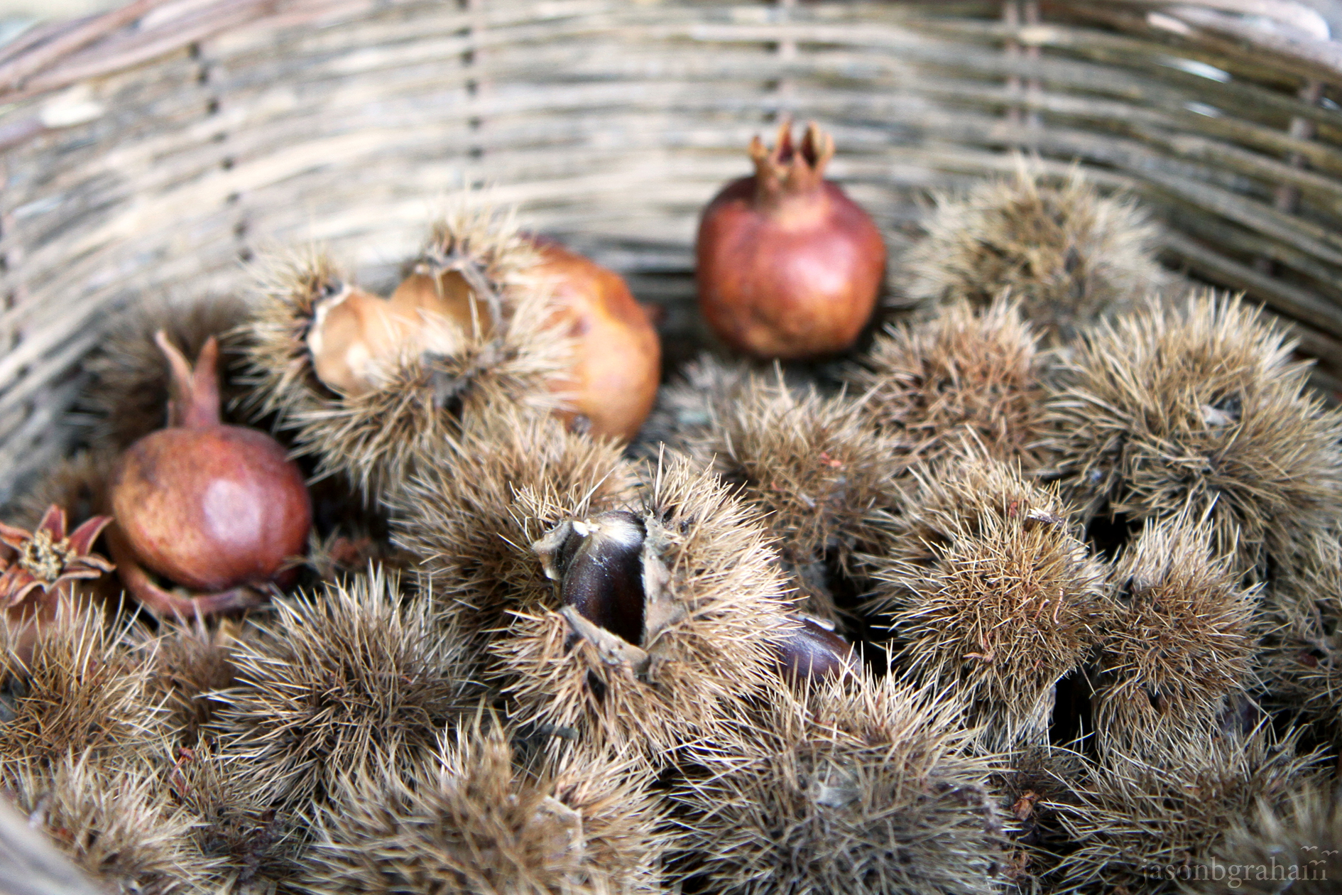 chestnuts-4920