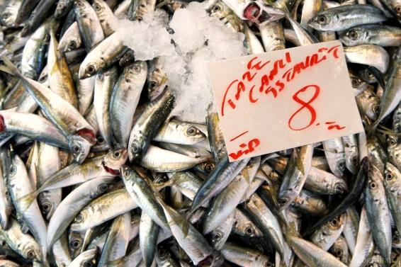 fish-3740