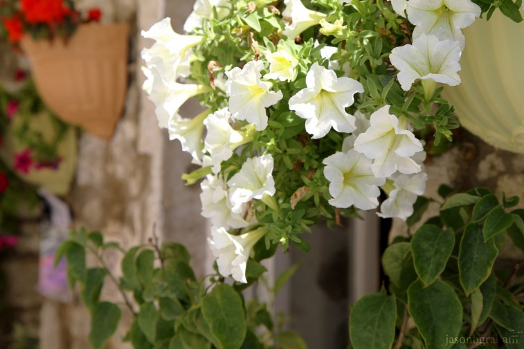flowers-0638