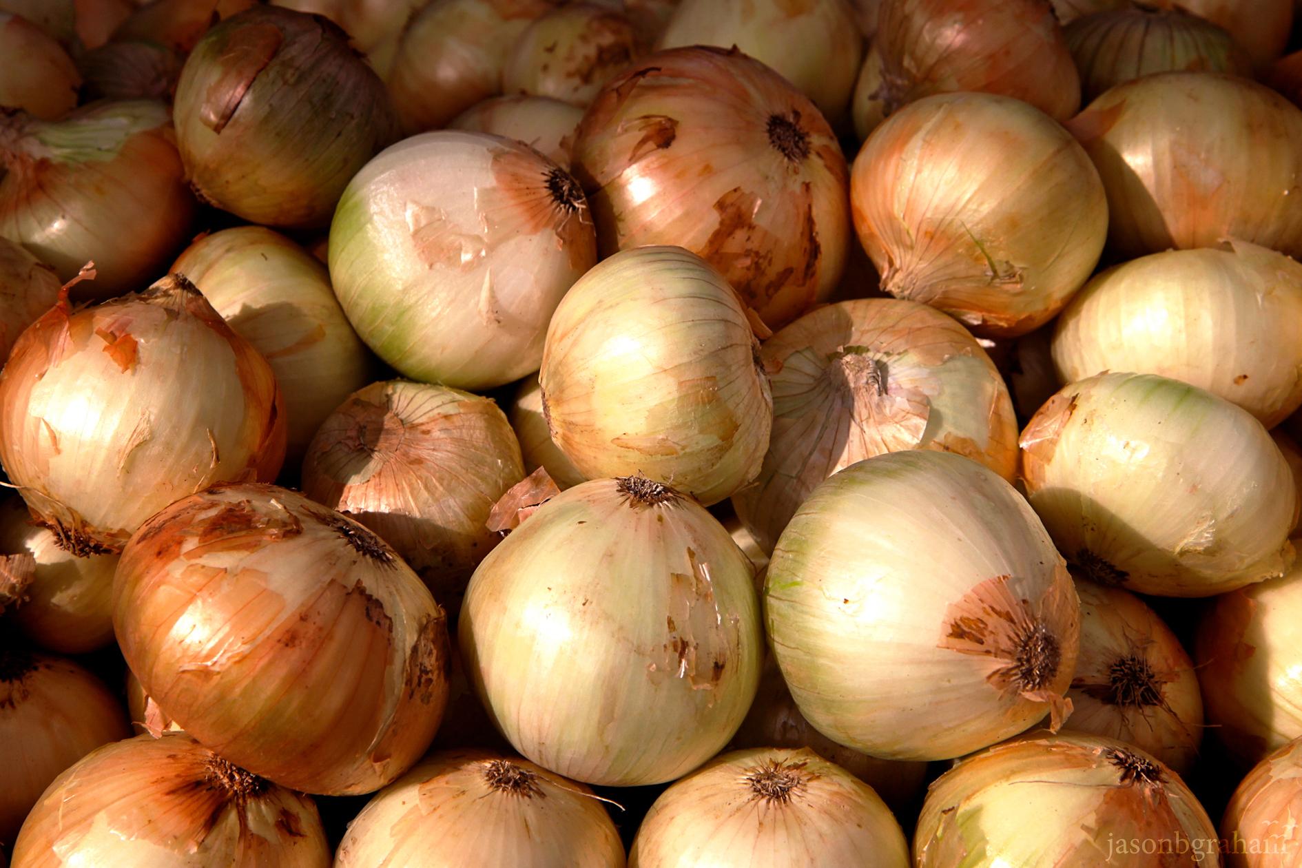 onions-9591