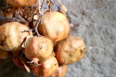 pomegranate-4959