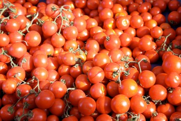 tomatoes-9638