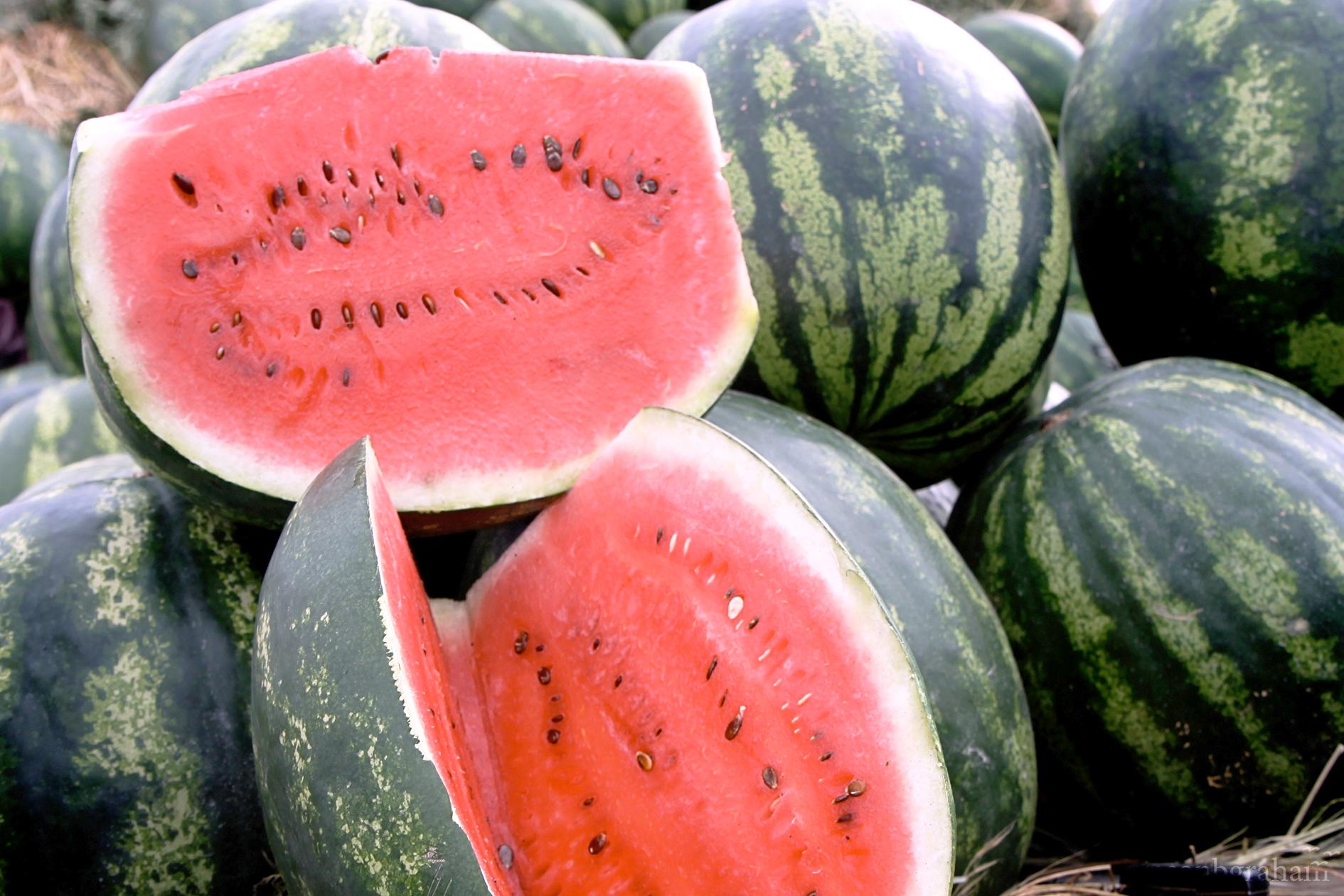 watermelon-9542