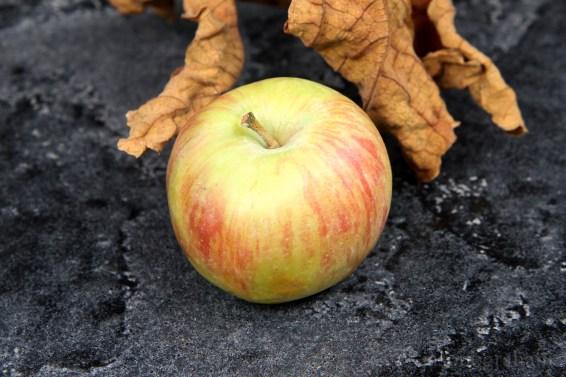 apple-elma-2182