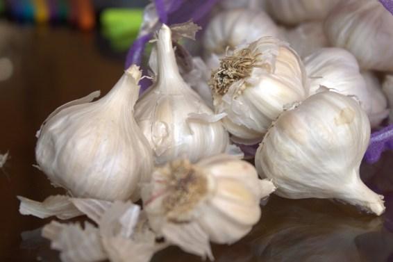 jason-b-graham-garlic-sarimsak-0005