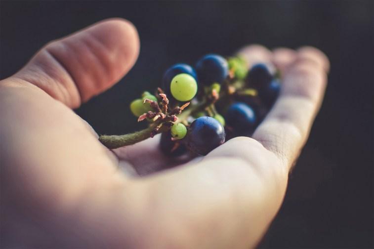 jason-b-graham-grapes-uzum-0008