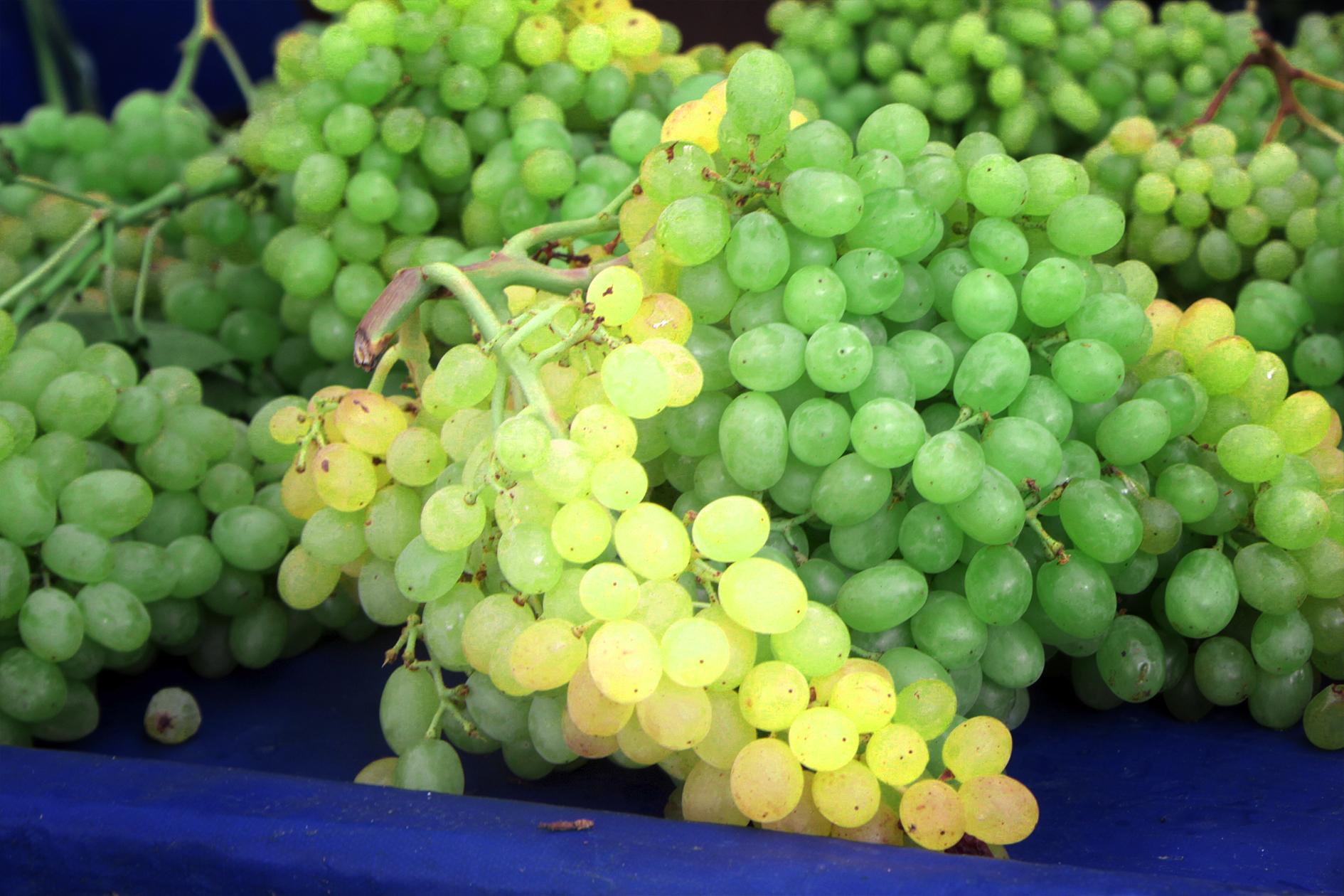 jason-b-graham-grapes-uzum-0009