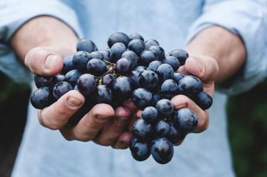 jason-b-graham-grapes-uzum-0012