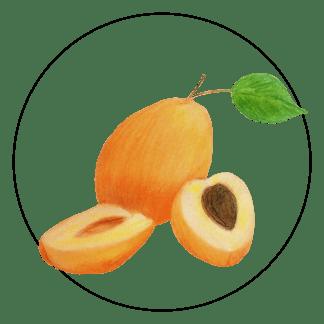 attribute-motif-apricot