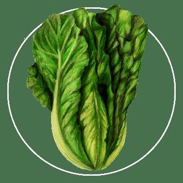 attribute-motif-lettuce-white