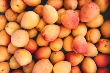jason-b-graham-apricot-kayisi-0002
