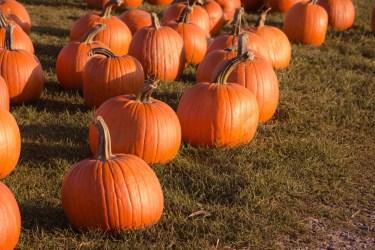 jason-b-graham-produce-pumpkin-kabak-0001