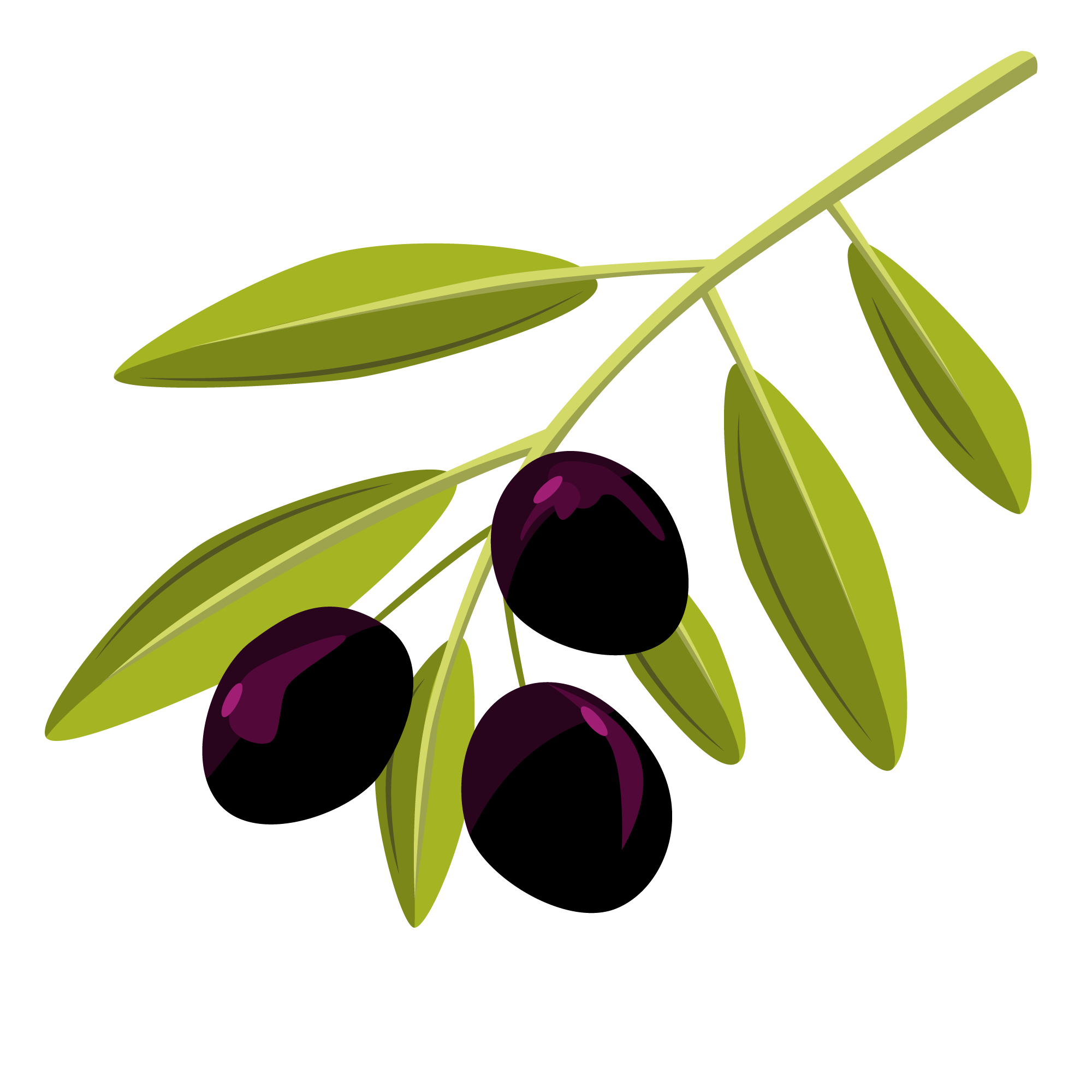 vector-olive