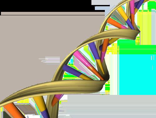 DNA_Double_Helix
