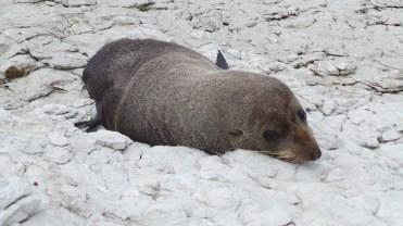 Seal being mischevous