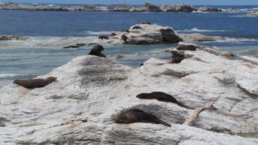 Bunch of seals