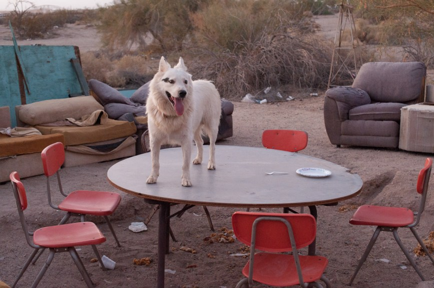 """""""If you want to understand freedom, just look at the life of dogs in the Slabs,"""" says Andrew, a resident originally from New Zealand, who helps Pastor Dave dish out free meals at the Haven. Nearly every long-term Slabber keeps a canine companion. Although they seem to roam free, most dogs stay close to home. Slab City, California 2018"""