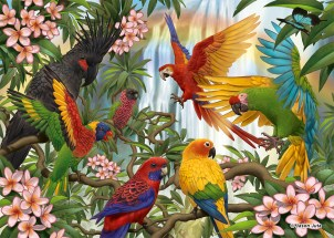 parrots_jasonjuta