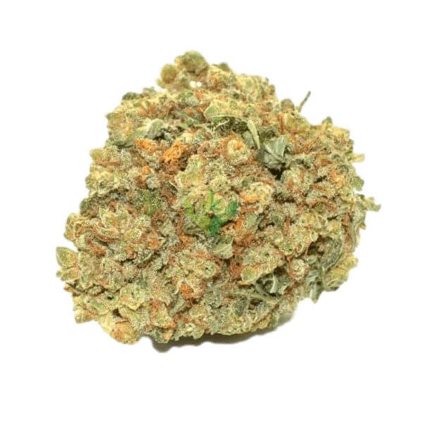 Moby Dick Strain