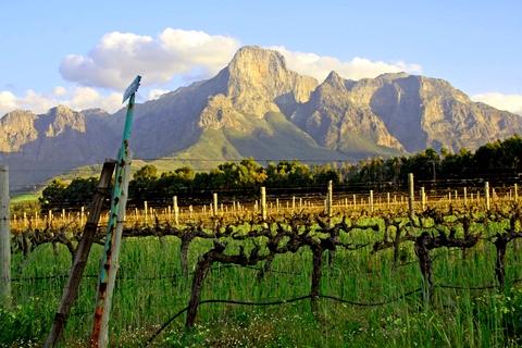Stellenbosch Vineyards Jason Oliva wine