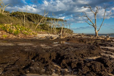 Black rocks, trees falling, wind blown trees losing foliage