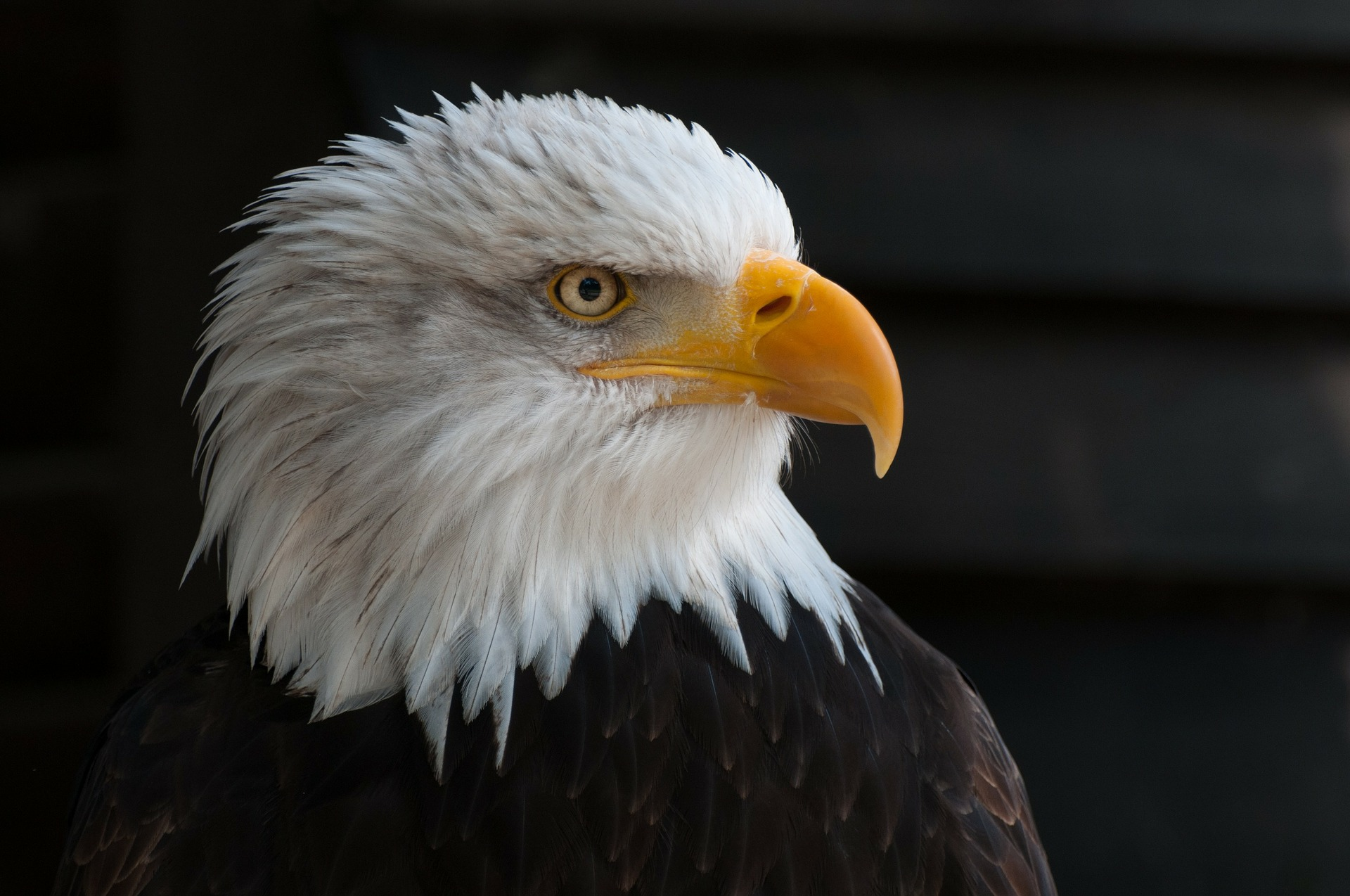 True facts about Eagles – For Writing out loud
