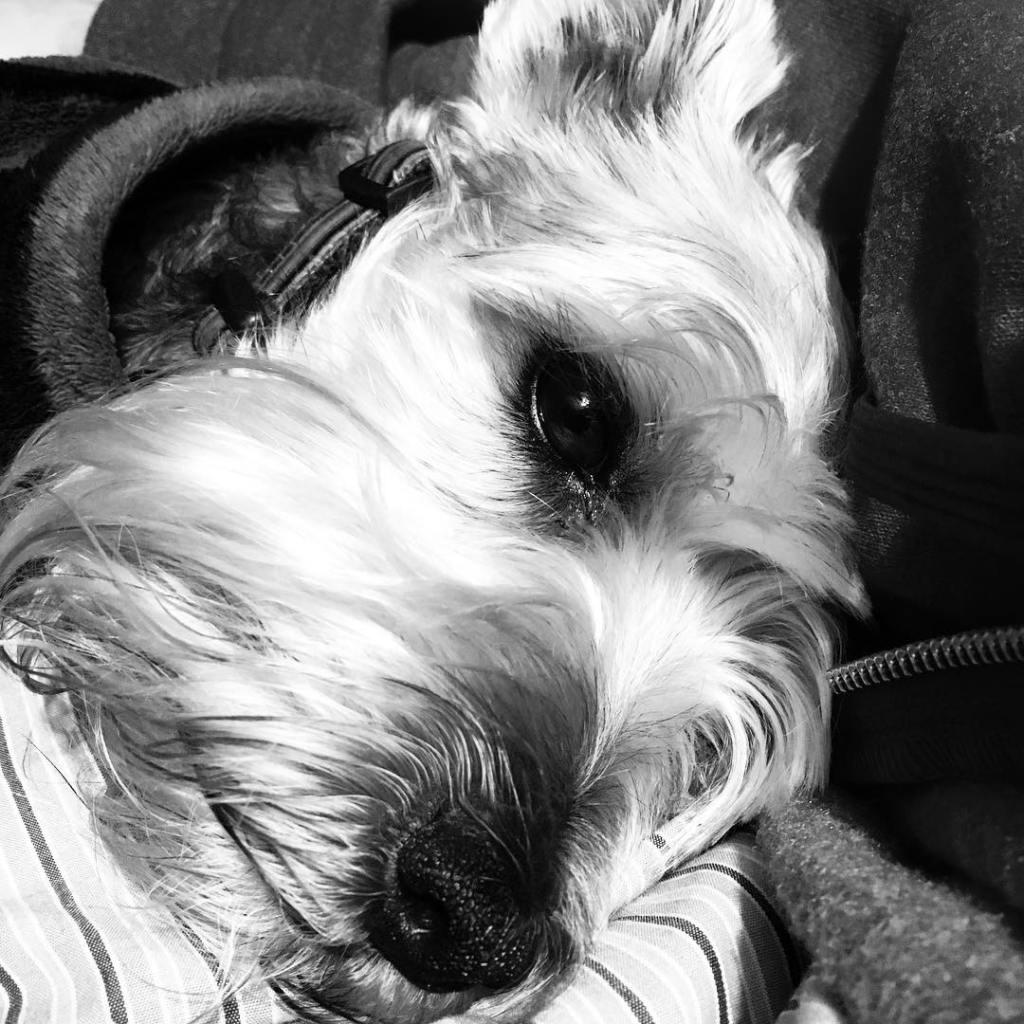 My sweet lil boy 1
