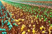 Hyper-color Flowers