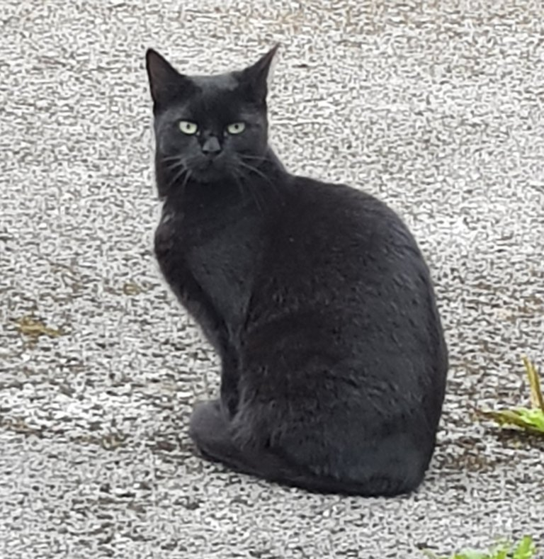 A photo of my black cat, Jasper.  Black Cat Awareness Month: A Celebration of these Beautiful Cats