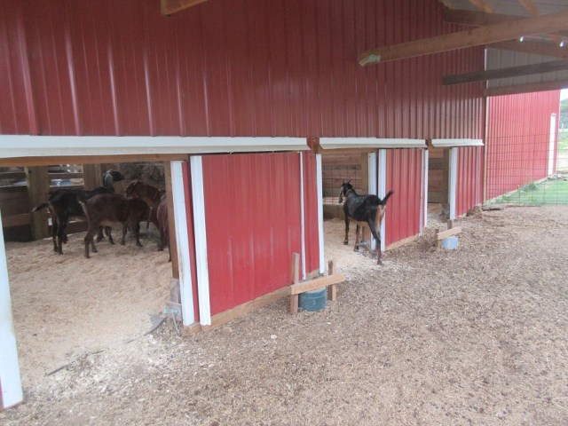 Access to barn stalls (does)