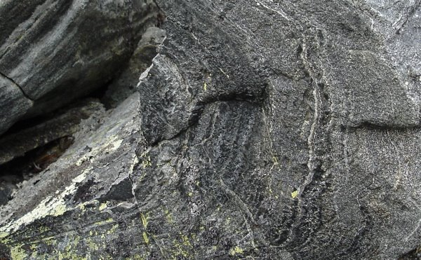 En sten i närbild