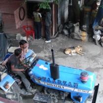 A dog sleeping on a street in Manali