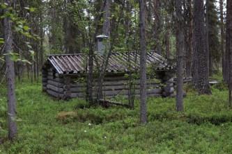 Koja i skogen