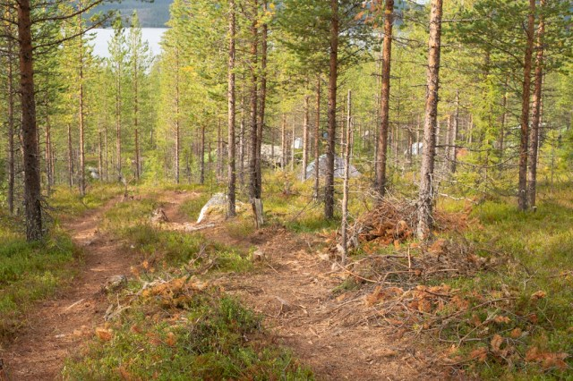 Spåren efter en skogsmaskin med tält i bakgrunden