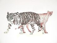 Tigre y guepardo: 50x65 cm. – Ballpoint pen on paper, 2013 - AVAILABLE