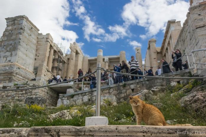 cats-of-acropolis-garfield